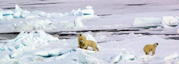 北極点クルーズ14日間イメージ